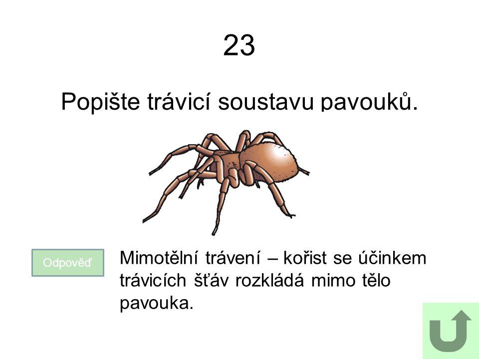 23 Popište trávicí soustavu pavouků. Odpověď Mimotělní trávení – kořist se účinkem trávicích šťáv rozkládá mimo tělo pavouka.