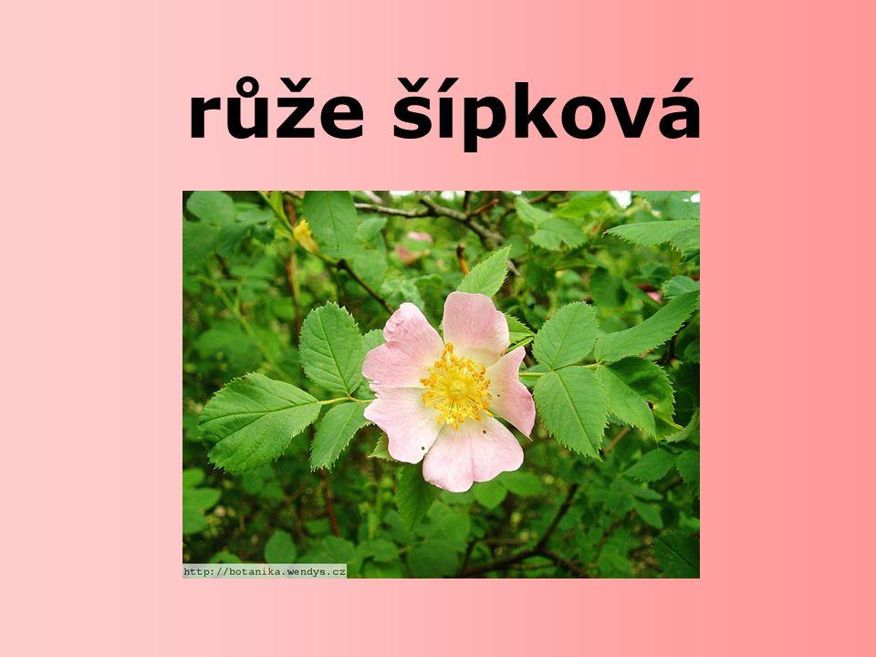  Kde se růže šípková vyskytuje.