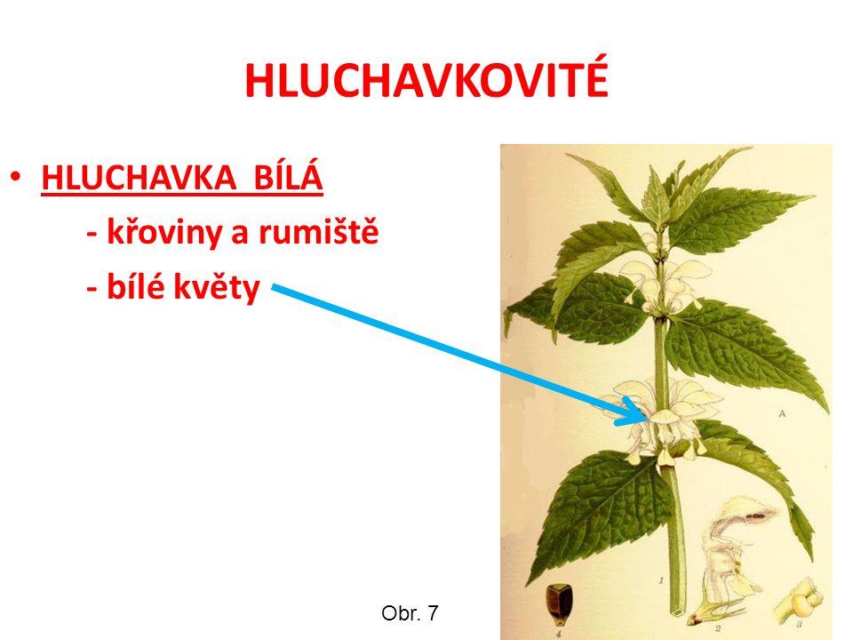 HLUCHAVKOVITÉ HLUCHAVKA BÍLÁ - křoviny a rumiště - bílé květy Obr. 7