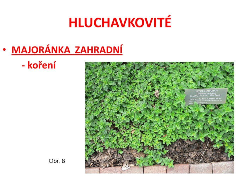 HLUCHAVKOVITÉ MAJORÁNKA ZAHRADNÍ - koření Obr. 8