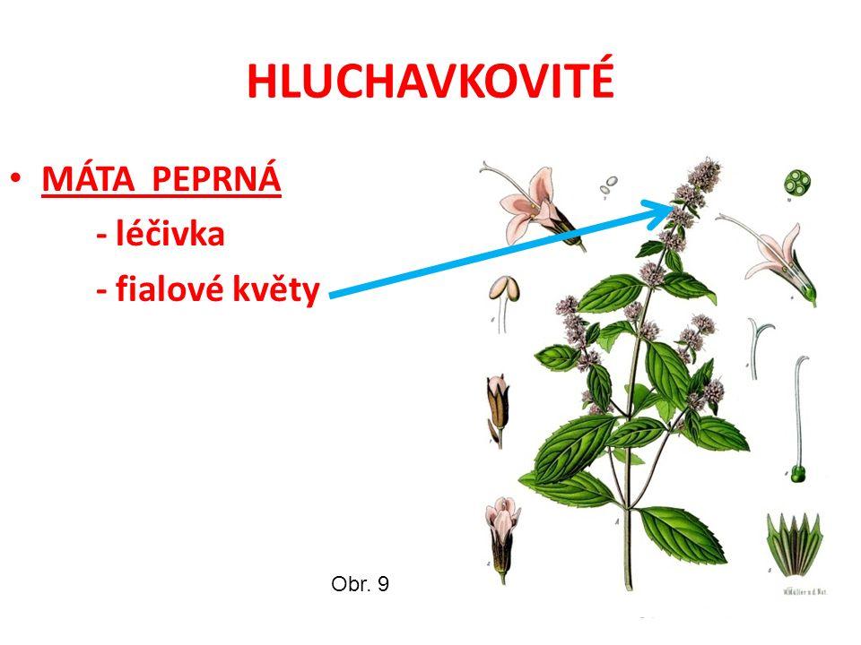 HLUCHAVKOVITÉ MÁTA PEPRNÁ - léčivka - fialové květy Obr. 9