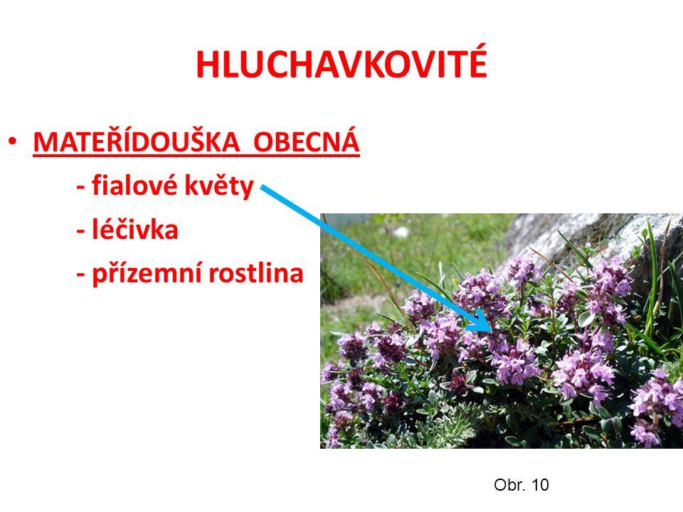 HLUCHAVKOVITÉ MATEŘÍDOUŠKA OBECNÁ - fialové květy - léčivka - přízemní rostlina Obr. 10