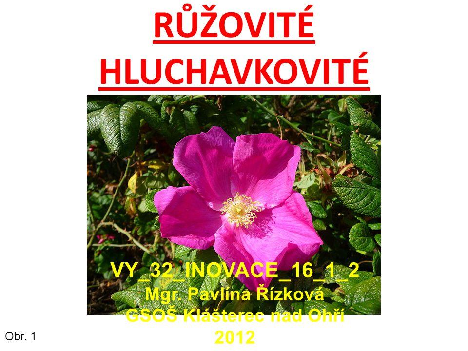RŮŽOVITÉ HLUCHAVKOVITÉ Obr. 1 VY_32_INOVACE_16_1_2 Mgr.