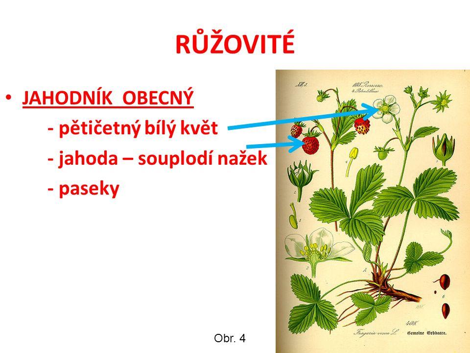 RŮŽOVITÉ JAHODNÍK OBECNÝ - pětičetný bílý květ - jahoda – souplodí nažek - paseky Obr. 4