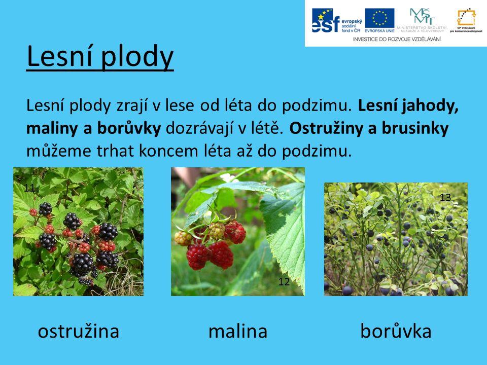 Lesní plody Lesní plody zrají v lese od léta do podzimu.