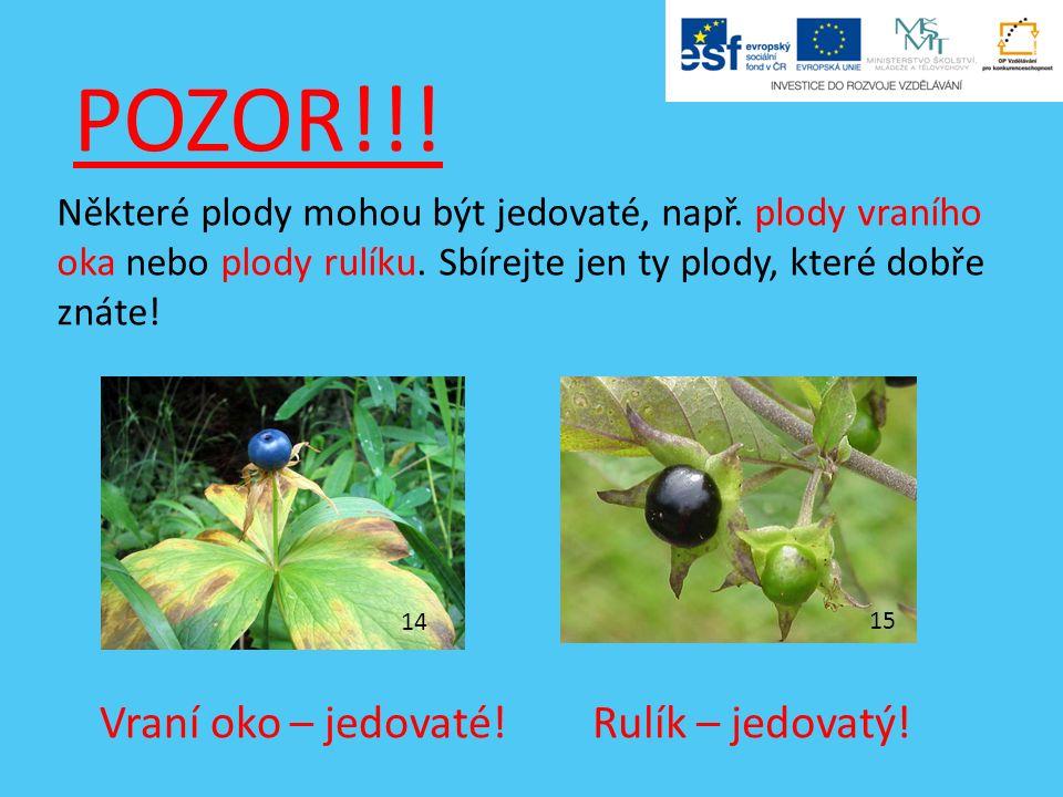 POZOR!!. Některé plody mohou být jedovaté, např. plody vraního oka nebo plody rulíku.