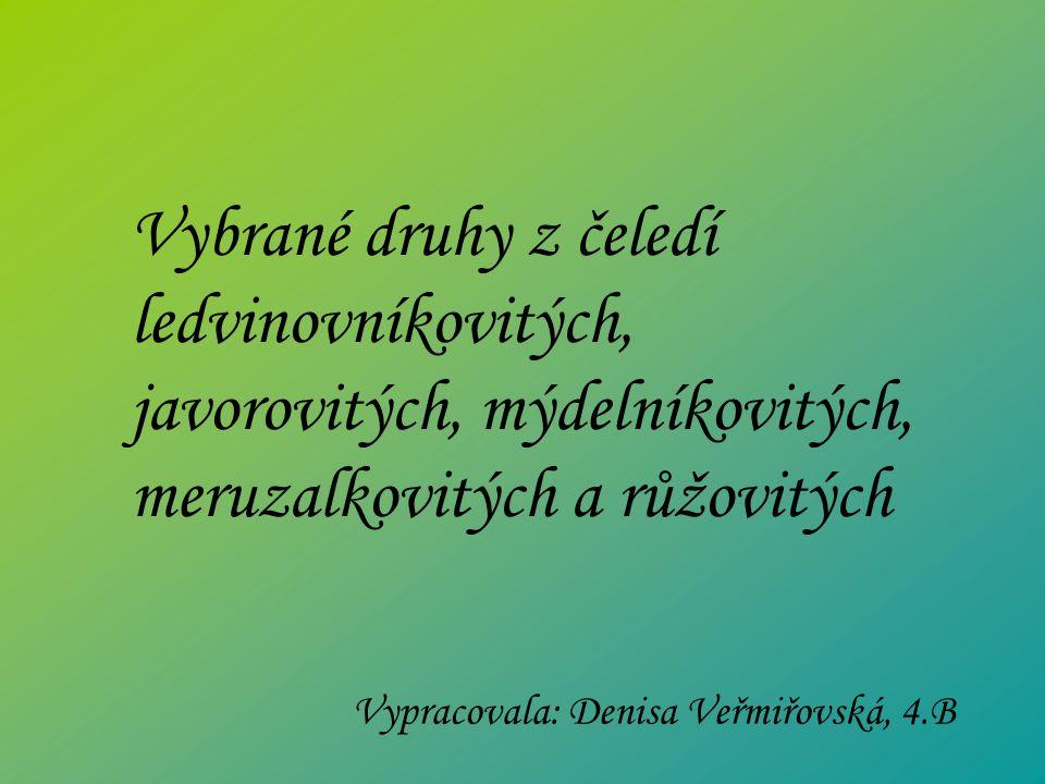 Vybrané druhy z čeledí ledvinovníkovitých, javorovitých, mýdelníkovitých, meruzalkovitých a růžovitých Vypracovala: Denisa Veřmiřovská, 4.B