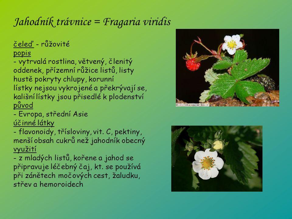 čeleď - růžovité popis - vytrvalá rostlina, větvený, členitý oddenek, přízemní růžice listů, listy hustě pokryty chlupy, korunní lístky nejsou vykrojené a překrývají se, kališní lístky jsou přisedlé k plodenství původ - Evropa, střední Asie účinné látky - flavonoidy, třísloviny, vit.