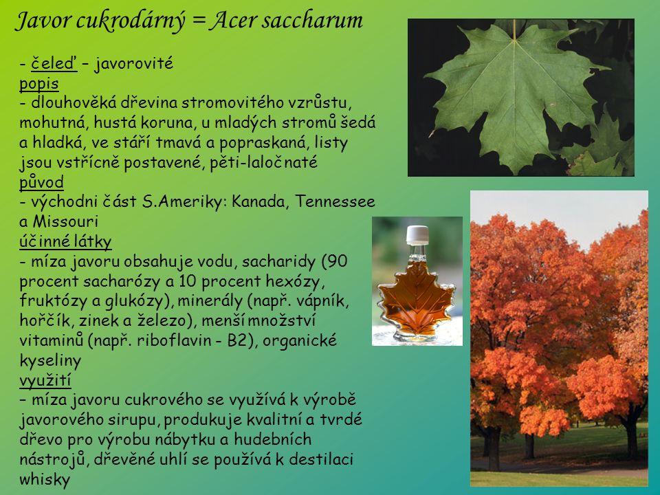 - čeleď – javorovité popis - dlouhověká dřevina stromovitého vzrůstu, mohutná, hustá koruna, u mladých stromů šedá a hladká, ve stáří tmavá a popraskaná, listy jsou vstřícně postavené, pěti-laločnaté původ - východni část S.Ameriky: Kanada, Tennessee a Missouri účinné látky - míza javoru obsahuje vodu, sacharidy (90 procent sacharózy a 10 procent hexózy, fruktózy a glukózy), minerály (např.