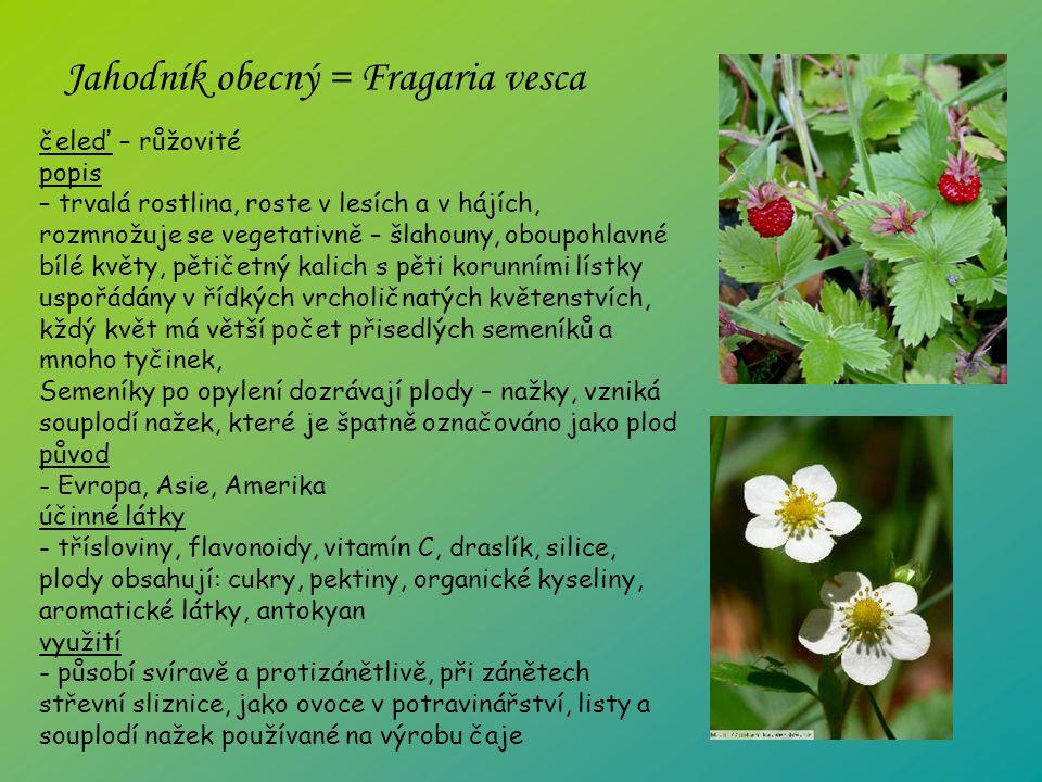 čeleď – růžovité popis – trvalá rostlina, roste v lesích a v hájích, rozmnožuje se vegetativně – šlahouny, oboupohlavné bílé květy, pětičetný kalich s pěti korunními lístky uspořádány v řídkých vrcholičnatých květenstvích, kždý květ má větší počet přisedlých semeníků a mnoho tyčinek, Semeníky po opylení dozrávají plody – nažky, vzniká souplodí nažek, které je špatně označováno jako plod původ - Evropa, Asie, Amerika účinné látky - třísloviny, flavonoidy, vitamín C, draslík, silice, plody obsahují: cukry, pektiny, organické kyseliny, aromatické látky, antokyan využití - působí svíravě a protizánětlivě, při zánětech střevní sliznice, jako ovoce v potravinářství, listy a souplodí nažek používané na výrobu čaje Jahodník obecný = Fragaria vesca