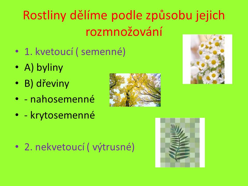 Rostliny dělíme podle způsobu jejich rozmnožování 1. kvetoucí ( semenné) A) byliny B) dřeviny - nahosemenné - krytosemenné 2. nekvetoucí ( výtrusné)
