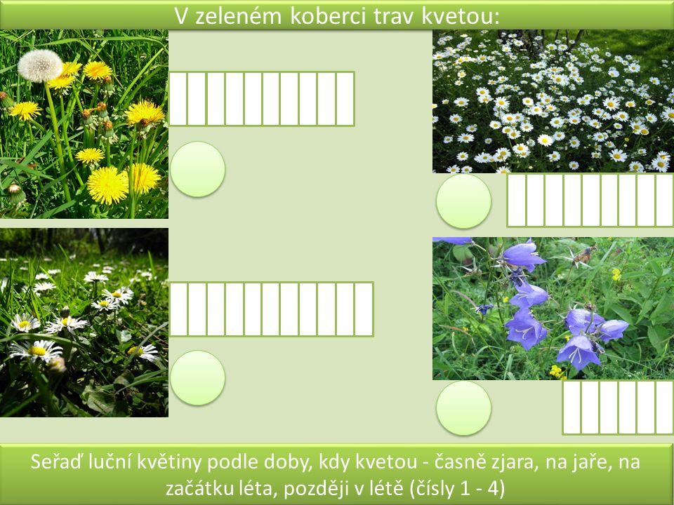 V zeleném koberci trav kvetou: Seřaď luční květiny podle doby, kdy kvetou - časně zjara, na jaře, na začátku léta, později v létě (čísly 1 - 4)
