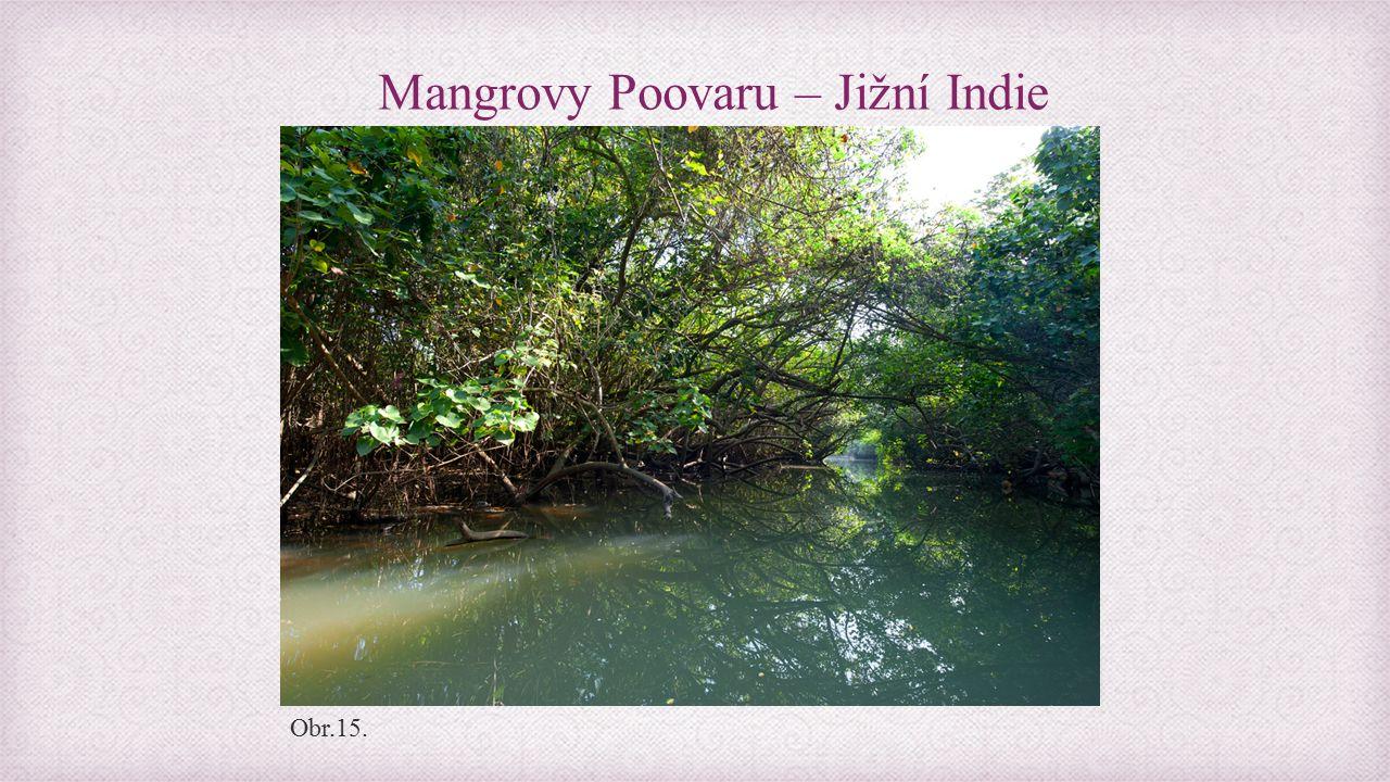 Mangrovy Poovaru – Jižní Indie Obr.15.