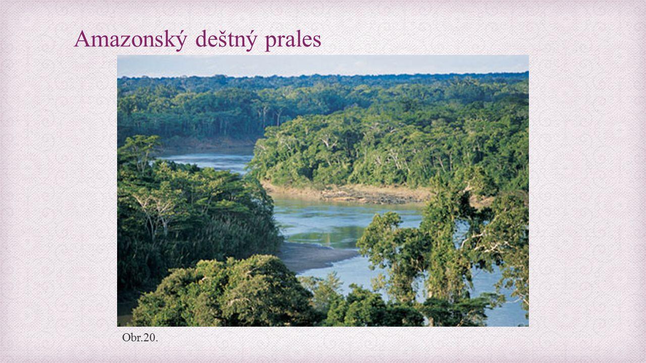 Amazonský deštný prales Obr.20.