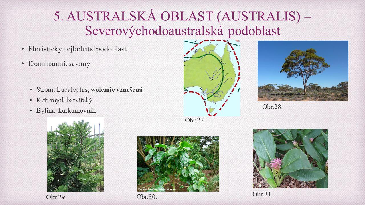Floristicky nejbohatší podoblast Dominantní: savany Strom: Eucalyptus, wolemie vznešená Keř: rojok barvířský Bylina: kurkumovník 5.