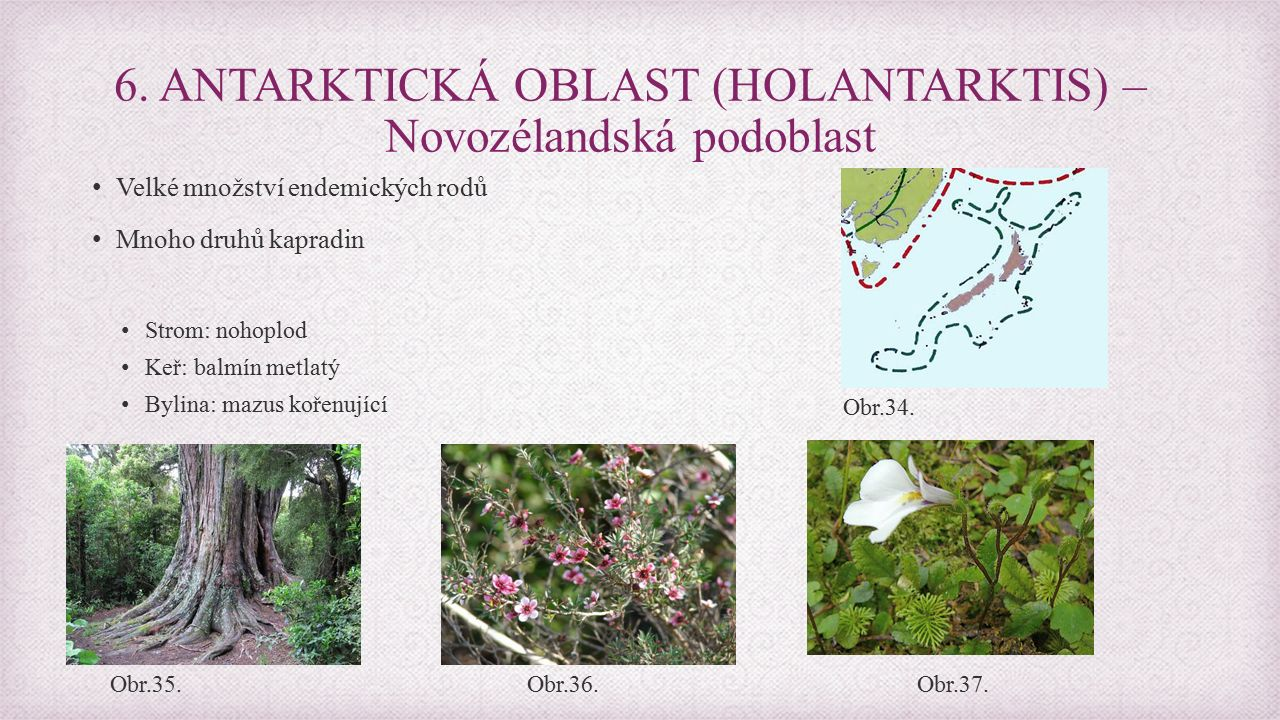 Velké množství endemických rodů Mnoho druhů kapradin Strom: nohoplod Keř: balmín metlatý Bylina: mazus kořenující 6.