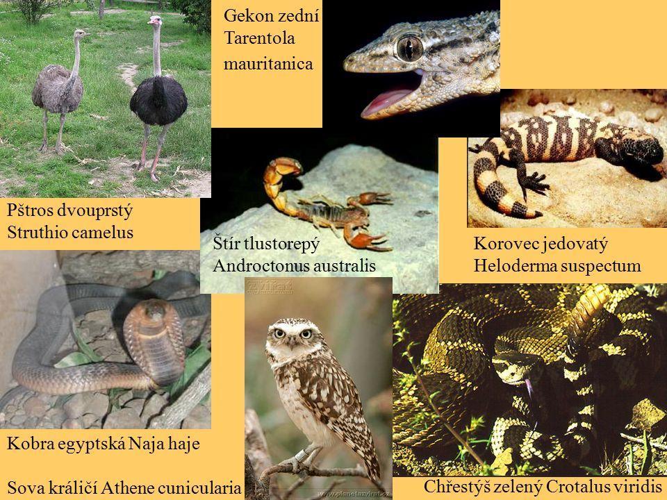 Kobra egyptská Naja haje Chřestýš zelený Crotalus viridis Štír tlustorepý Androctonus australis Korovec jedovatý Heloderma suspectum Pštros dvouprstý