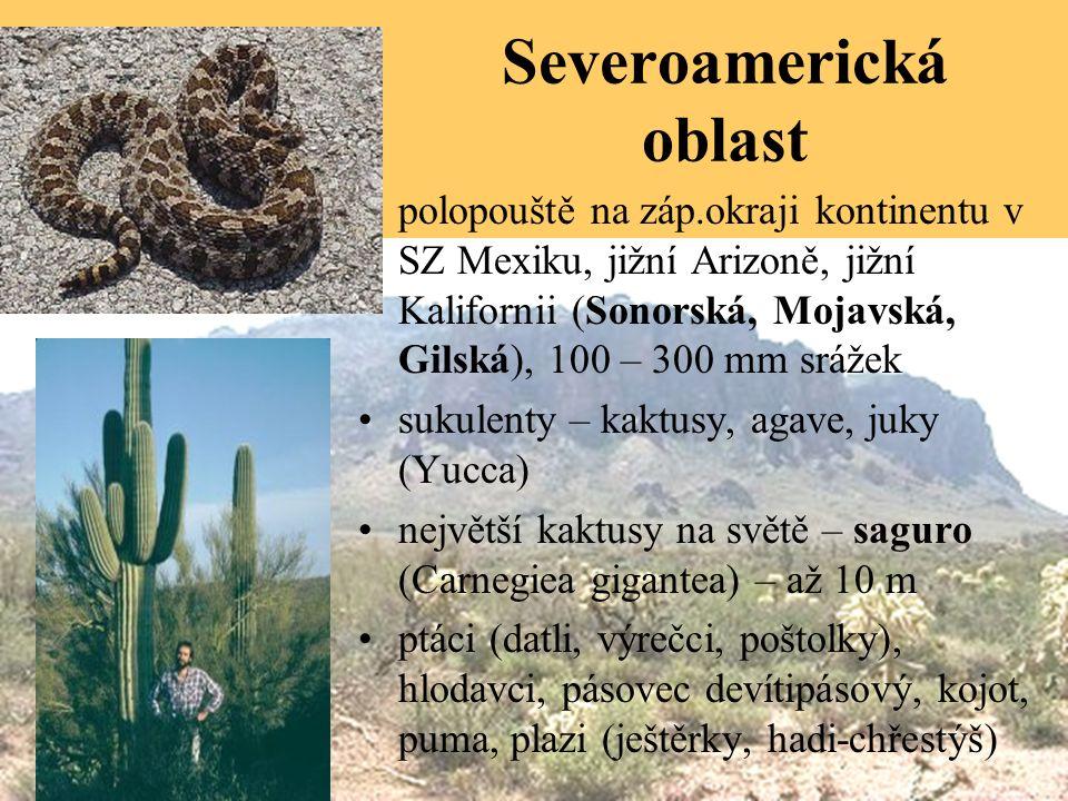 Severoamerická oblast polopouště na záp.okraji kontinentu v SZ Mexiku, jižní Arizoně, jižní Kalifornii (Sonorská, Mojavská, Gilská), 100 – 300 mm srážek sukulenty – kaktusy, agave, juky (Yucca) největší kaktusy na světě – saguro (Carnegiea gigantea) – až 10 m ptáci (datli, výrečci, poštolky), hlodavci, pásovec devítipásový, kojot, puma, plazi (ještěrky, hadi-chřestýš)