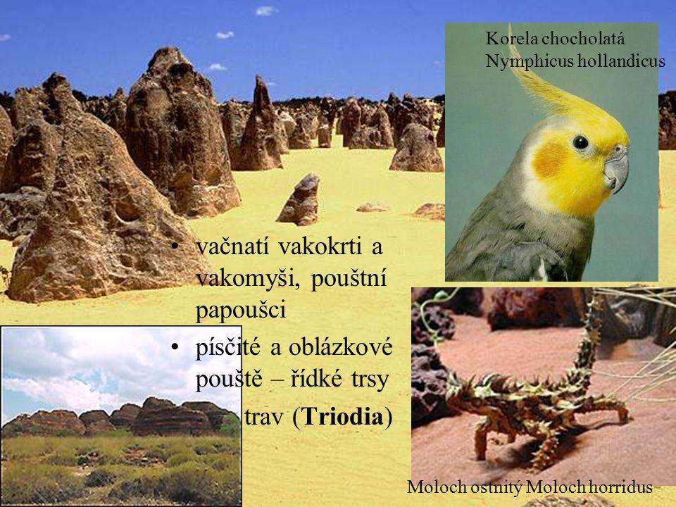 vačnatí vakokrti a vakomyši, pouštní papoušci písčité a oblázkové pouště – řídké trsy trav (Triodia) Moloch ostnitý Moloch horridus Korela chocholatá Nymphicus hollandicus