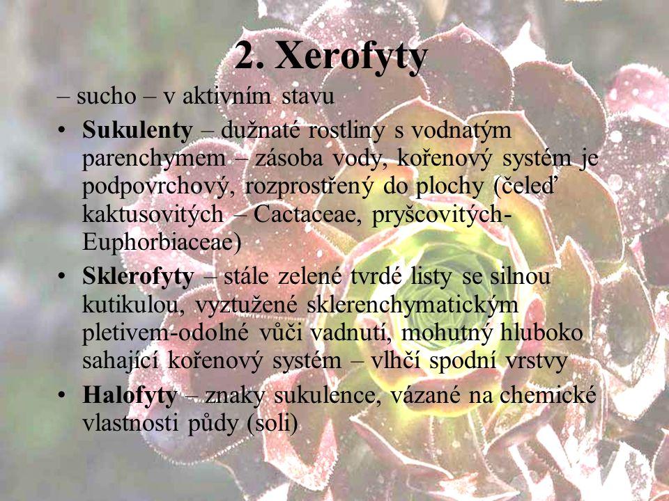 2. Xerofyty – sucho – v aktivním stavu Sukulenty – dužnaté rostliny s vodnatým parenchymem – zásoba vody, kořenový systém je podpovrchový, rozprostřen
