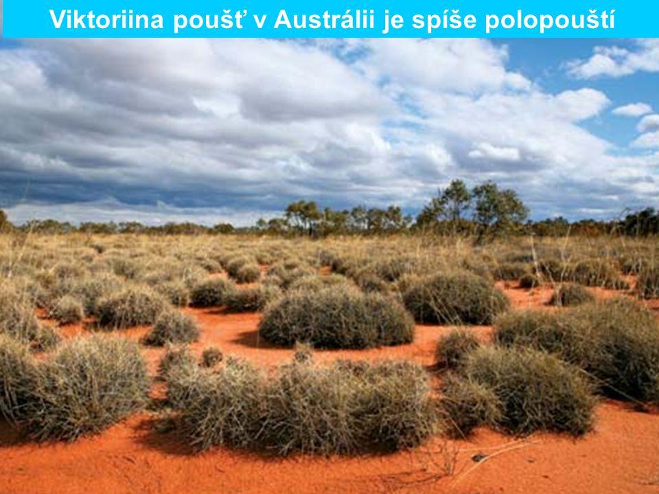 Viktoriina poušť v Austrálii je spíše polopouští