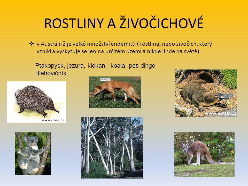 ROSTLINY A ŽIVOČICHOVÉ  v Austrálii žije velké množství endemitů ( rostlina, nebo živočich, který vznikl a vyskytuje se jen na určitém území a nikde