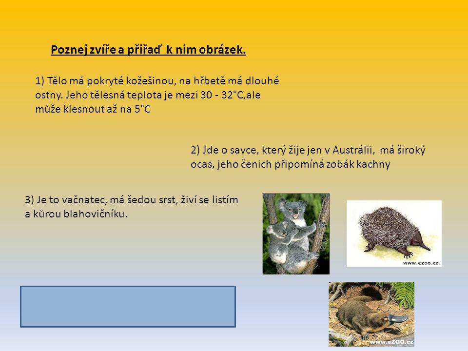 Řešení: 1 – ježura, 2 – ptakopysk, 3 - koala Poznej zvíře a přiřaď k nim obrázek. 1) Tělo má pokryté kožešinou, na hřbetě má dlouhé ostny. Jeho tělesn
