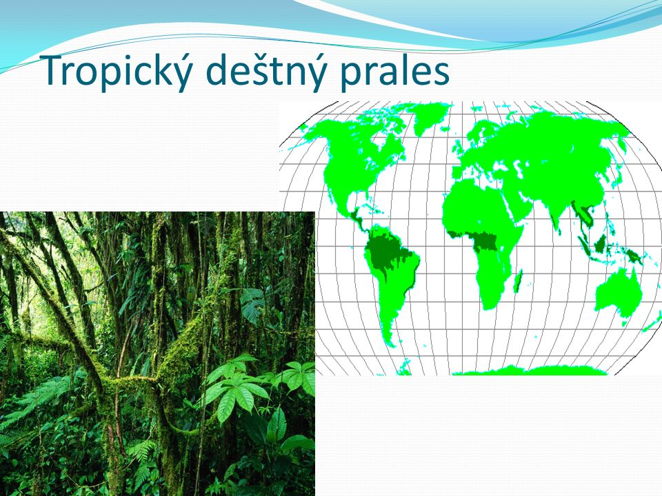 Správné odpovědi: 1. Biomy tvoří jednotlivé vegetační pásy 2. a)c)d)