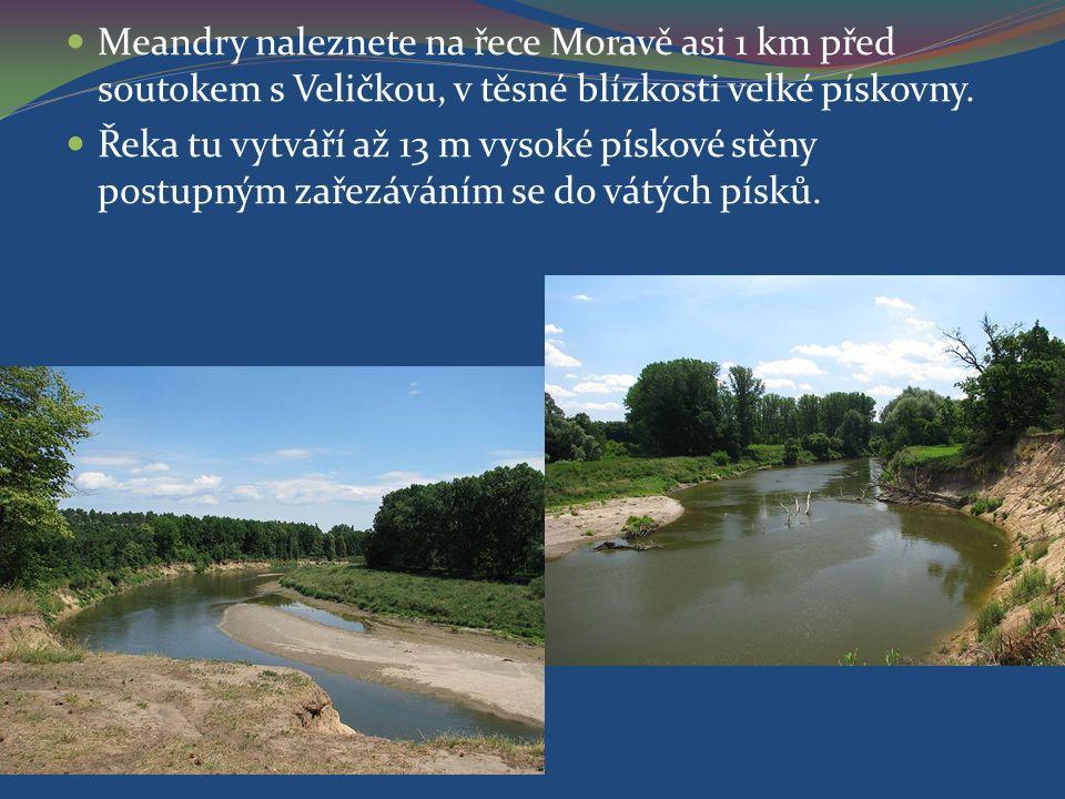 Meandry naleznete na řece Moravě asi 1 km před soutokem s Veličkou, v těsné blízkosti velké pískovny.