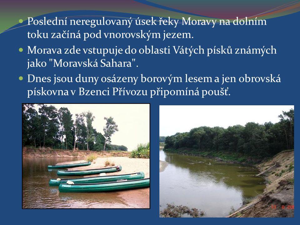 Poslední neregulovaný úsek řeky Moravy na dolním toku začíná pod vnorovským jezem.