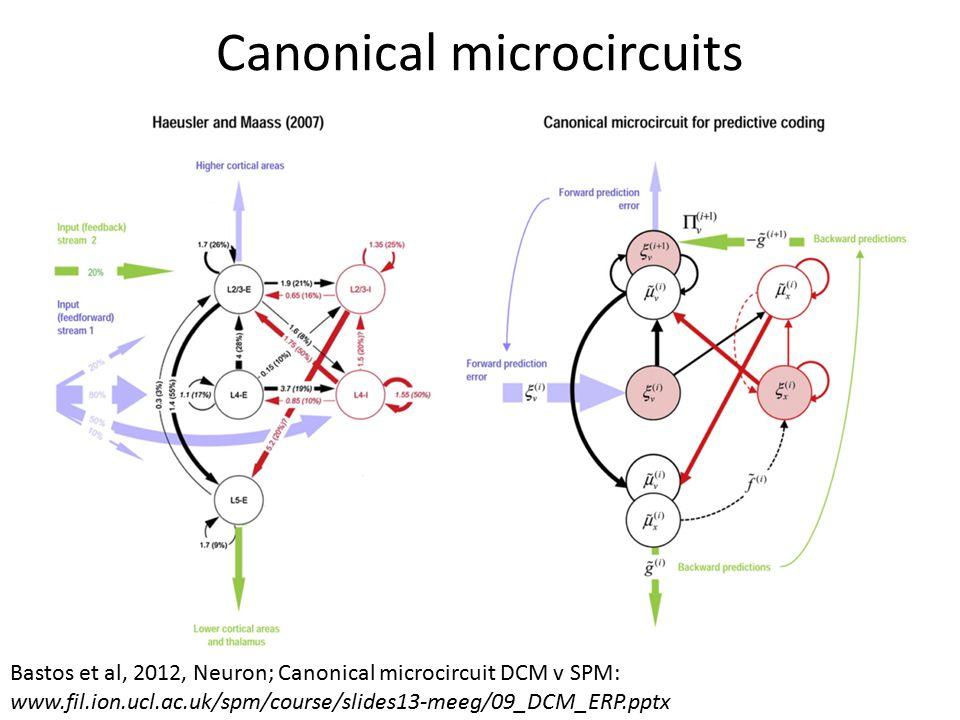 Canonical microcircuits Bastos et al, 2012, Neuron; Canonical microcircuit DCM v SPM: www.fil.ion.ucl.ac.uk/spm/course/slides13-meeg/09_DCM_ERP.pptx