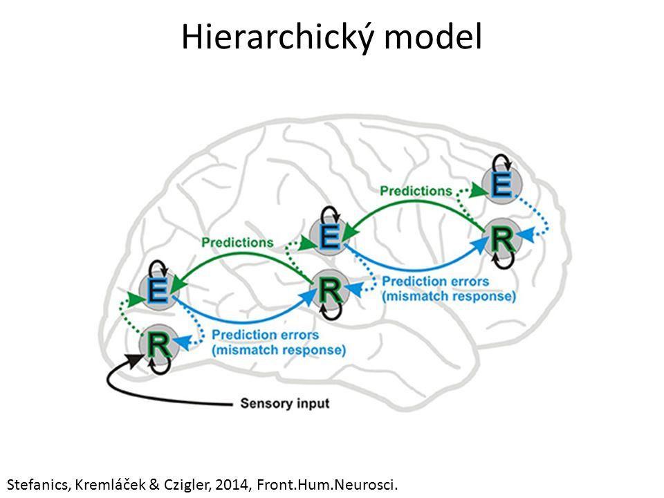 Hierarchický model Stefanics, Kremláček & Czigler, 2014, Front.Hum.Neurosci.