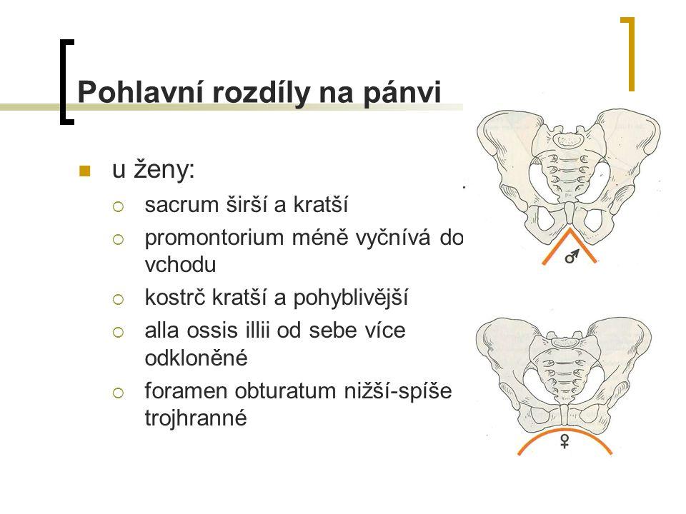 Pohlavní rozdíly na pánvi u ženy:  sacrum širší a kratší  promontorium méně vyčnívá do vchodu  kostrč kratší a pohyblivější  alla ossis illii od sebe více odkloněné  foramen obturatum nižší-spíše trojhranné