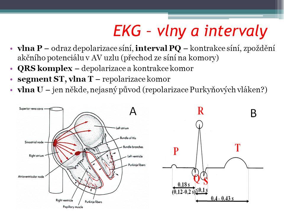 EKG – vlny a intervaly vlna P – odraz depolarizace síní, interval PQ – kontrakce síní, zpoždění akčního potenciálu v AV uzlu (přechod ze síní na komor