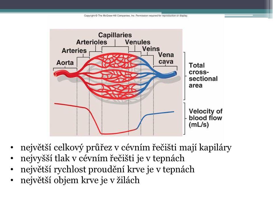 Rozložení krve v oběhu celý oběh systémový oběh