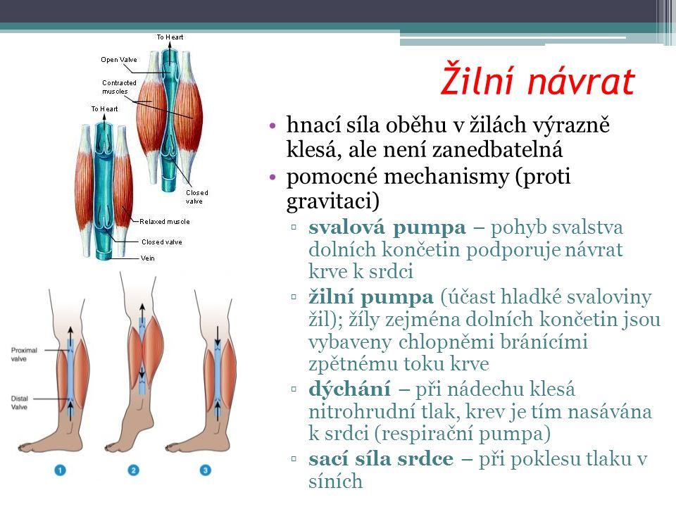 Žilní návrat hnací síla oběhu v žilách výrazně klesá, ale není zanedbatelná pomocné mechanismy (proti gravitaci) ▫svalová pumpa – pohyb svalstva dolní