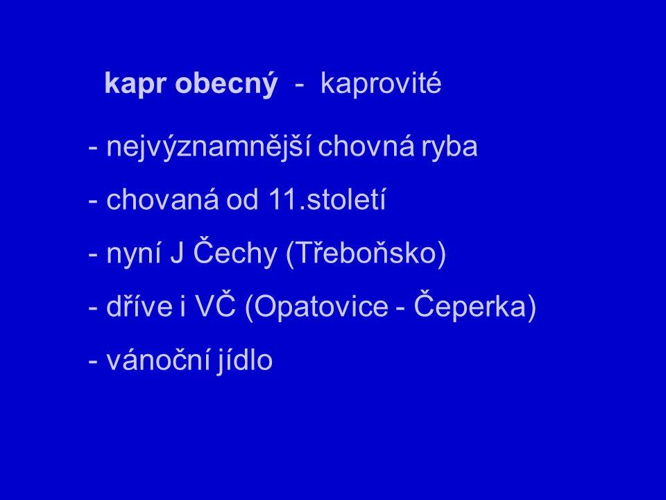 kapr obecný - kaprovité - nejvýznamnější chovná ryba - chovaná od 11.století - nyní J Čechy (Třeboňsko) - dříve i VČ (Opatovice - Čeperka) - vánoční jídlo