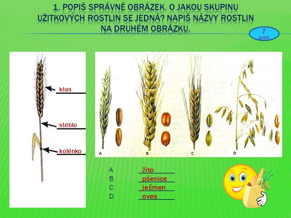A__________ B__________ C__________ D__________ klas stéblo kolénko žito pšenice ječmen oves 7 BODŮ
