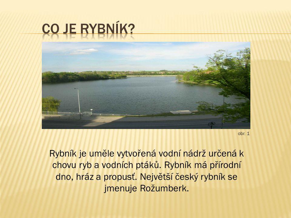 Rybník je uměle vytvořená vodní nádrž určená k chovu ryb a vodních ptáků. Rybník má přírodní dno, hráz a propusť. Největší český rybník se jmenuje Rož