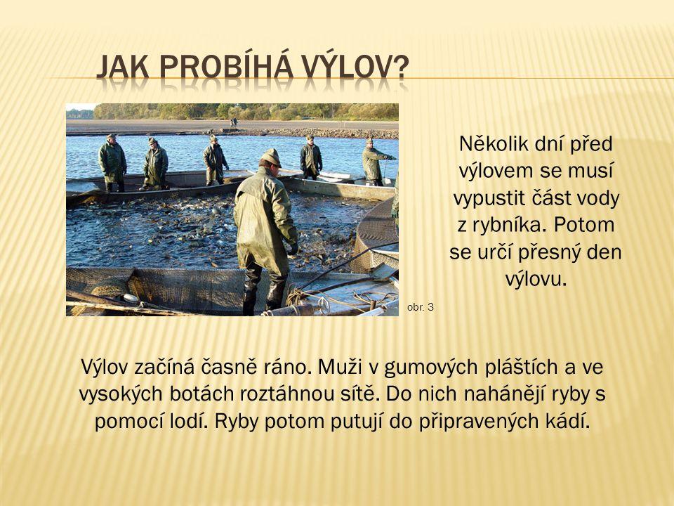 Několik dní před výlovem se musí vypustit část vody z rybníka. Potom se určí přesný den výlovu. Výlov začíná časně ráno. Muži v gumových pláštích a ve