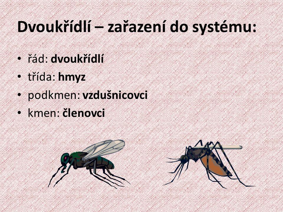 Dvoukřídlí – zařazení do systému: řád: dvoukřídlí třída: hmyz podkmen: vzdušnicovci kmen: členovci