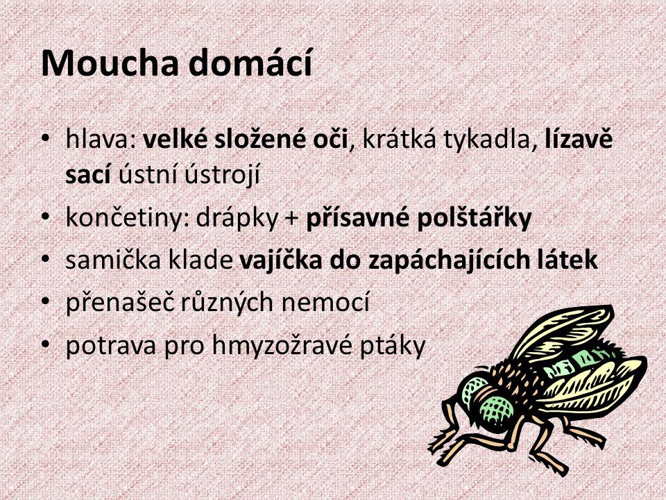 Moucha domácí hlava: velké složené oči, krátká tykadla, lízavě sací ústní ústrojí končetiny: drápky + přísavné polštářky samička klade vajíčka do zapáchajících látek přenašeč různých nemocí potrava pro hmyzožravé ptáky