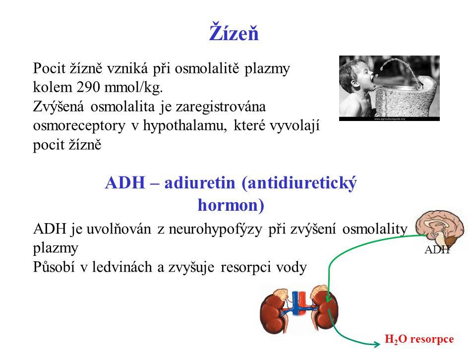 31 Žízeň Pocit žízně vzniká při osmolalitě plazmy kolem 290 mmol/kg. Zvýšená osmolalita je zaregistrována osmoreceptory v hypothalamu, které vyvolají