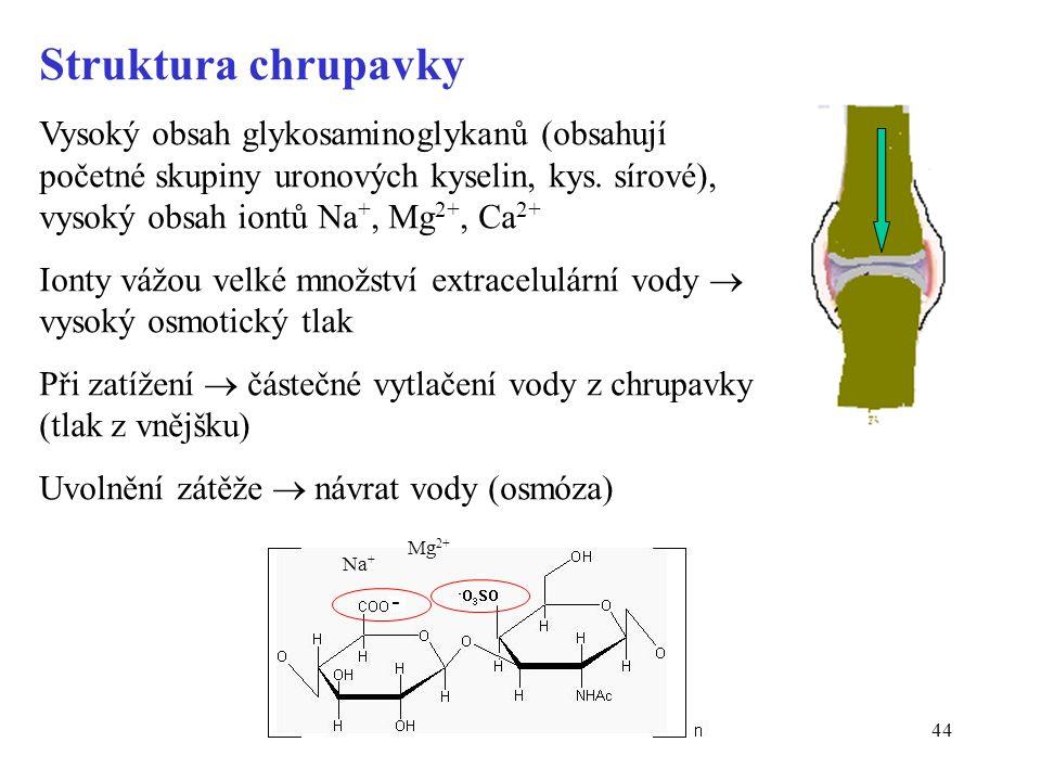 44 Struktura chrupavky Vysoký obsah glykosaminoglykanů (obsahují početné skupiny uronových kyselin, kys. sírové), vysoký obsah iontů Na +, Mg 2+, Ca 2