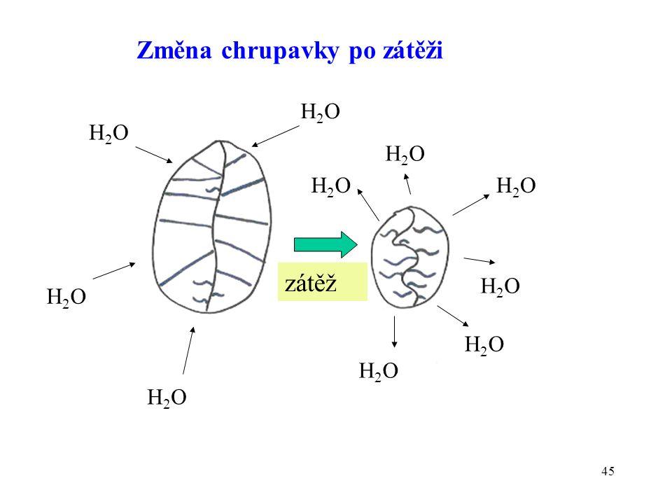 45 Změna chrupavky po zátěži zátěž H2OH2O H2OH2O H2OH2O H2OH2O H2OH2O H2OH2O H2OH2O H2OH2O H2OH2O H2OH2O