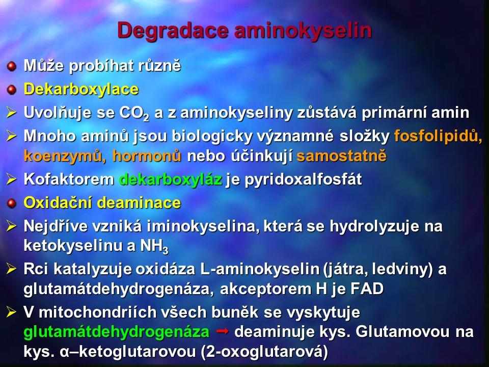 Degradace aminokyselin Může probíhat různě Dekarboxylace  Uvolňuje se CO 2 a z aminokyseliny zůstává primární amin  Mnoho aminů jsou biologicky významné složky fosfolipidů, koenzymů, hormonů nebo účinkují samostatně  Kofaktorem dekarboxyláz je pyridoxalfosfát Oxidační deaminace  Nejdříve vzniká iminokyselina, která se hydrolyzuje na ketokyselinu a NH 3  Rci katalyzuje oxidáza L-aminokyselin (játra, ledviny) a glutamátdehydrogenáza, akceptorem H je FAD  V mitochondriích všech buněk se vyskytuje glutamátdehydrogenáza  deaminuje kys.