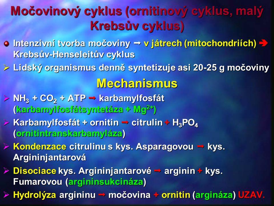 Močovinový cyklus (ornitinový cyklus, malý Krebsův cyklus) Intenzivní tvorba močoviny  v játrech (mitochondriích)  Krebsův-Henseleitův cyklus  Lidský organismus denně syntetizuje asi 20-25 g močoviny Mechanismus  NH 3 + CO 2 + ATP  karbamylfosfát (karbamylfosfátsyntetáza + Mg 2+ )  Karbamylfosfát + ornitin  citrulin + H 3 PO 4 (ornitintranskarbamyláza)  Kondenzace citrulinu s kys.