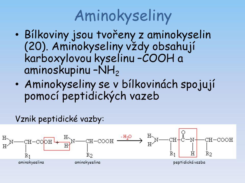 Aminokyseliny Bílkoviny jsou tvořeny z aminokyselin (20).