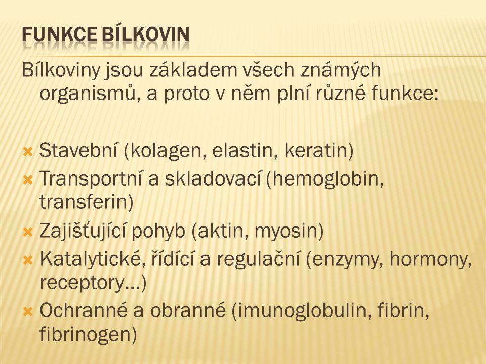 Bílkoviny jsou základem všech známých organismů, a proto v něm plní různé funkce:  Stavební (kolagen, elastin, keratin)  Transportní a skladovací (hemoglobin, transferin)  Zajišťující pohyb (aktin, myosin)  Katalytické, řídící a regulační (enzymy, hormony, receptory…)  Ochranné a obranné (imunoglobulin, fibrin, fibrinogen)