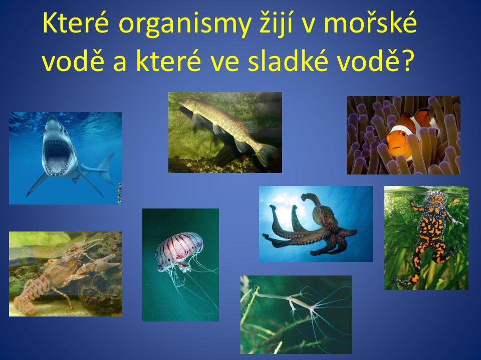 Které organismy žijí v mořské vodě a které ve sladké vodě?
